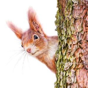 Red Alert - Coloured pencil Red Squirrel portrait by wildlife portrait artist Angie