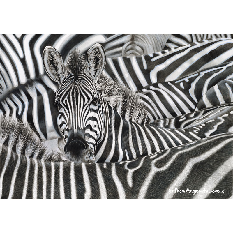 Lost in a Crowd - Coloured pencil Zebra portrait by wildlife artist Angie