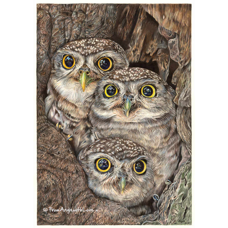 Fledging Day - Little Owl Portrait by Wildlife Artist Angie