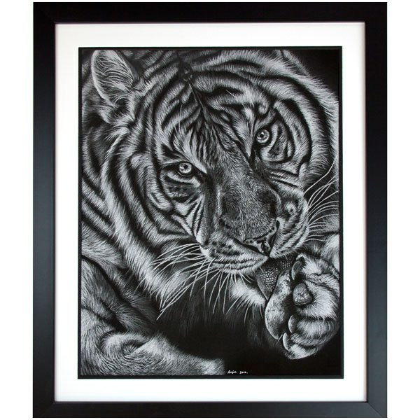 Mohan - Framed Tiger Portrait