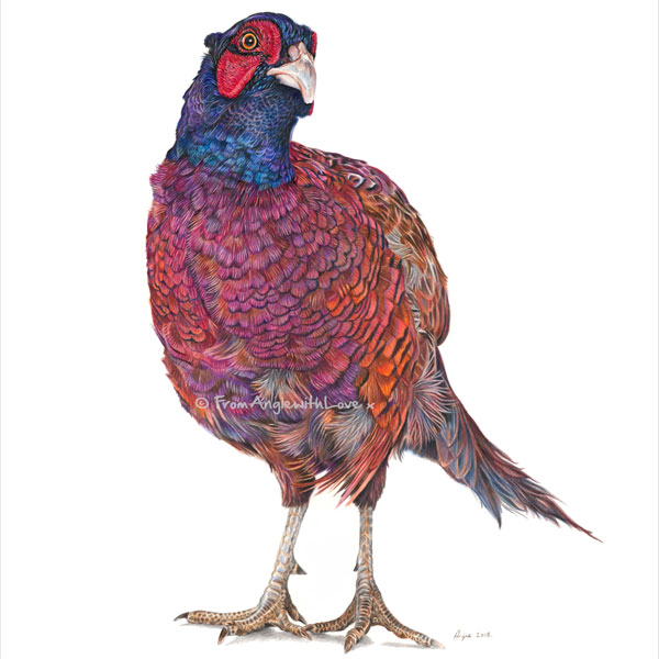 Inquisitive George Coloured Pencil Pheasant Portrait by Angie