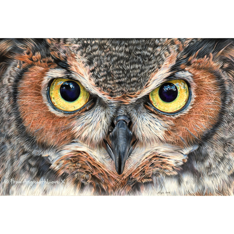 A Thousand Yard Stare - Coloured pencil Eagle Owl portrait