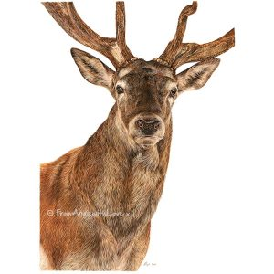 Monarch - Red Deer Stag Portrait by Angie