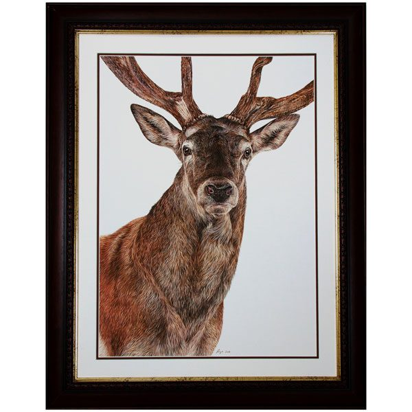 Monarch - Framed Red Deer Stag Portrait