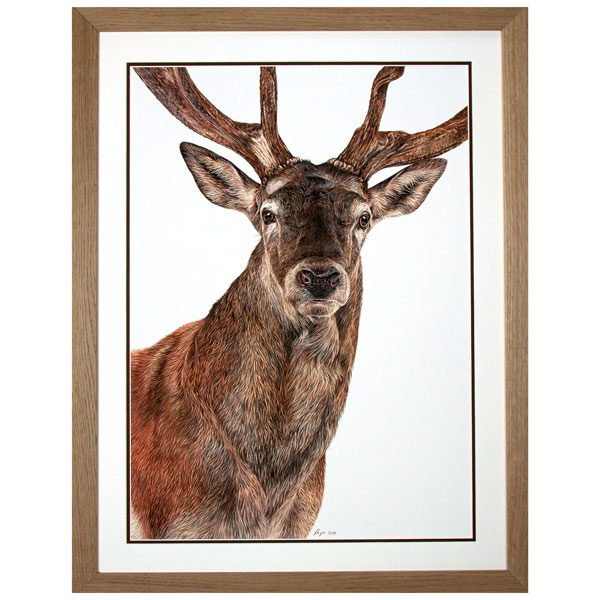 Monarch - Red Deer Stag Portrait in Oak Frame