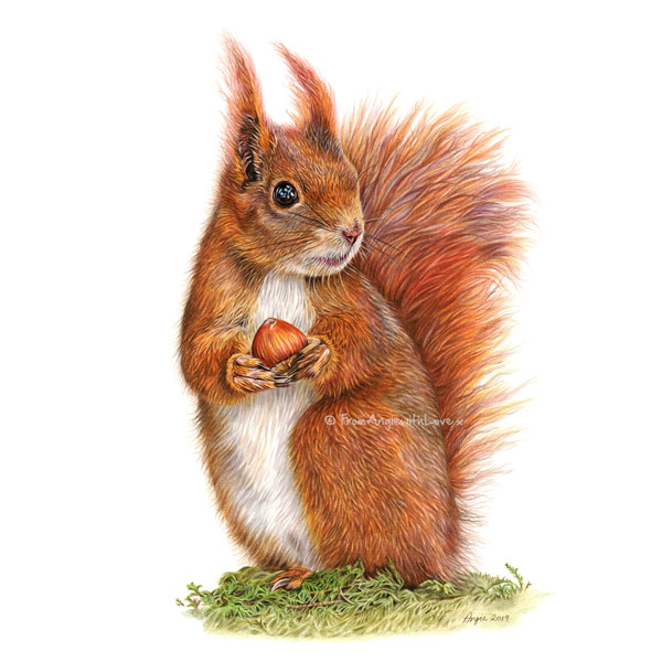 Caching In Red Squirrel Portrait