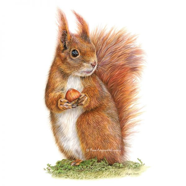 Caching In Red Squirrel Portrait by Wildlife Artist Angie