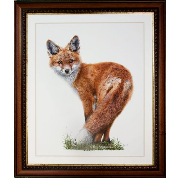 Brief Encounter - Red Fox Portrait in a walnut/gold frame