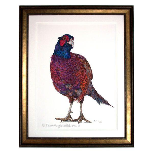 Inquisitive George Framed Pheasant Portrait