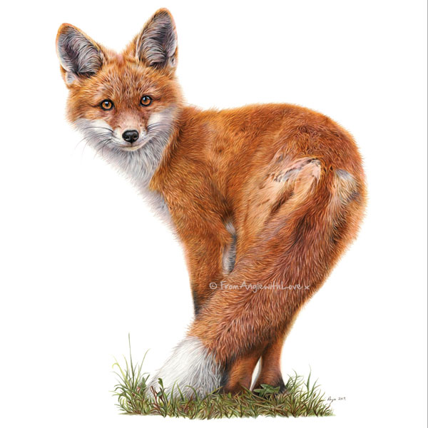 Brief Encounter - Red Fox Portrait by Angie x