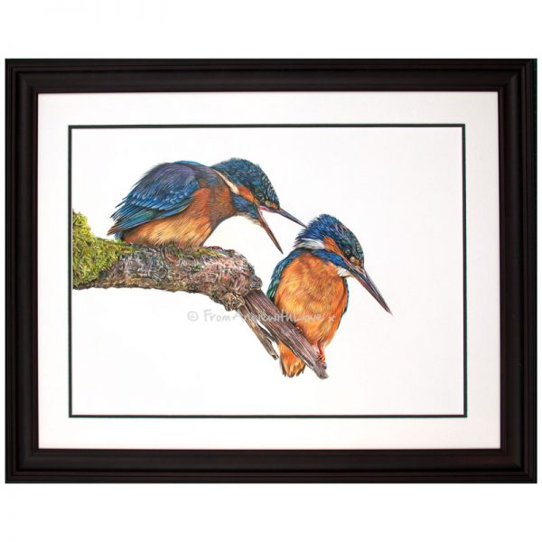 Domestic Bliss - Kingfisher Portrait