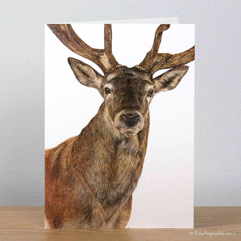 Monarch Red Deer Stag Greeting Card by Pencil artist Angie