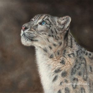 Mountain Spirit - Snow Leopard wildlife art print