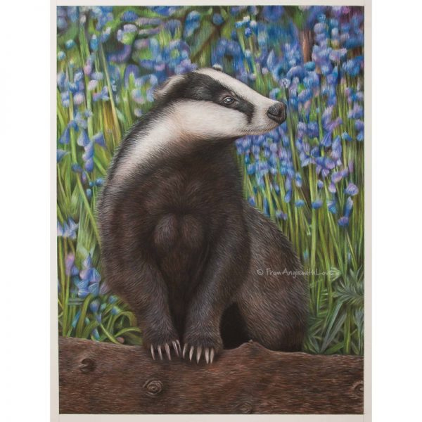 Bluebell Wood Badger Portrait by Pencil Artist Angie