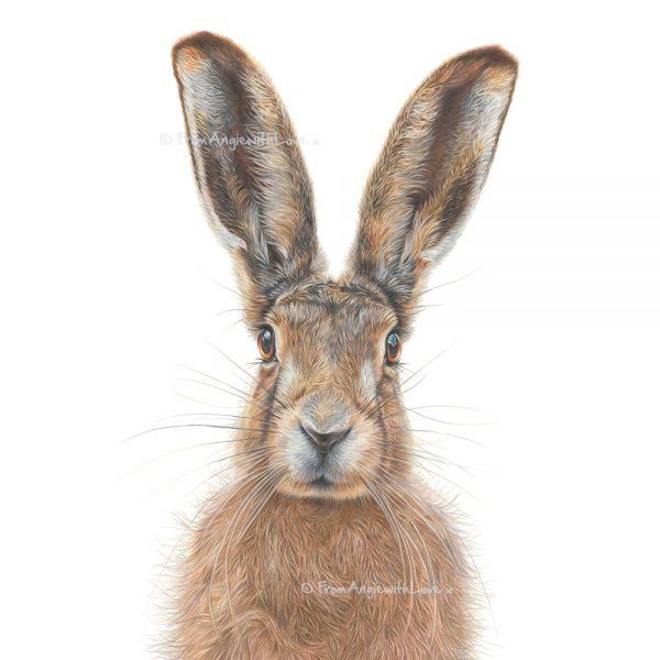 Mr Brambles Hare portrait by wildlife artist Angie