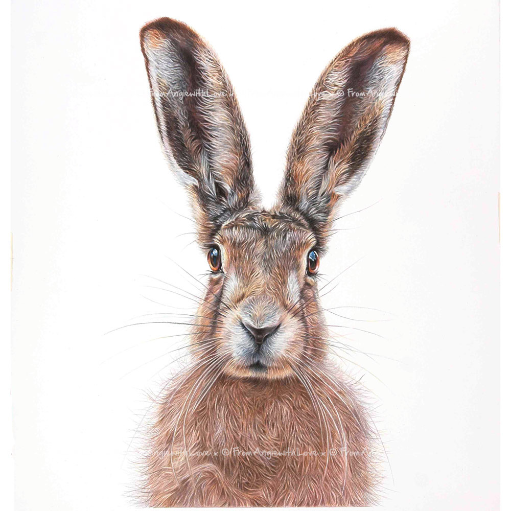 Mr Brambles - Brown Hare wildlife art print by pencil artist Angie