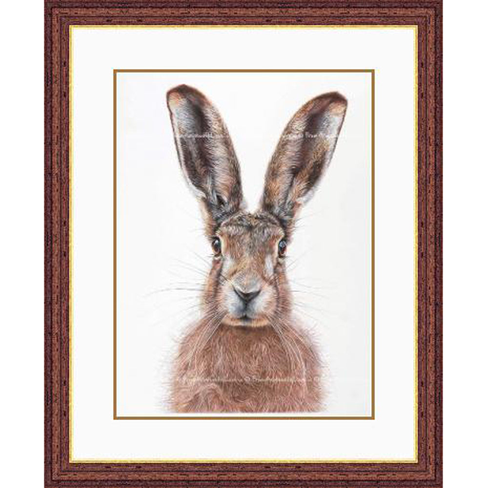 Mr Brambles - framed Brown Hare wildlife art print by pencil artist Angie