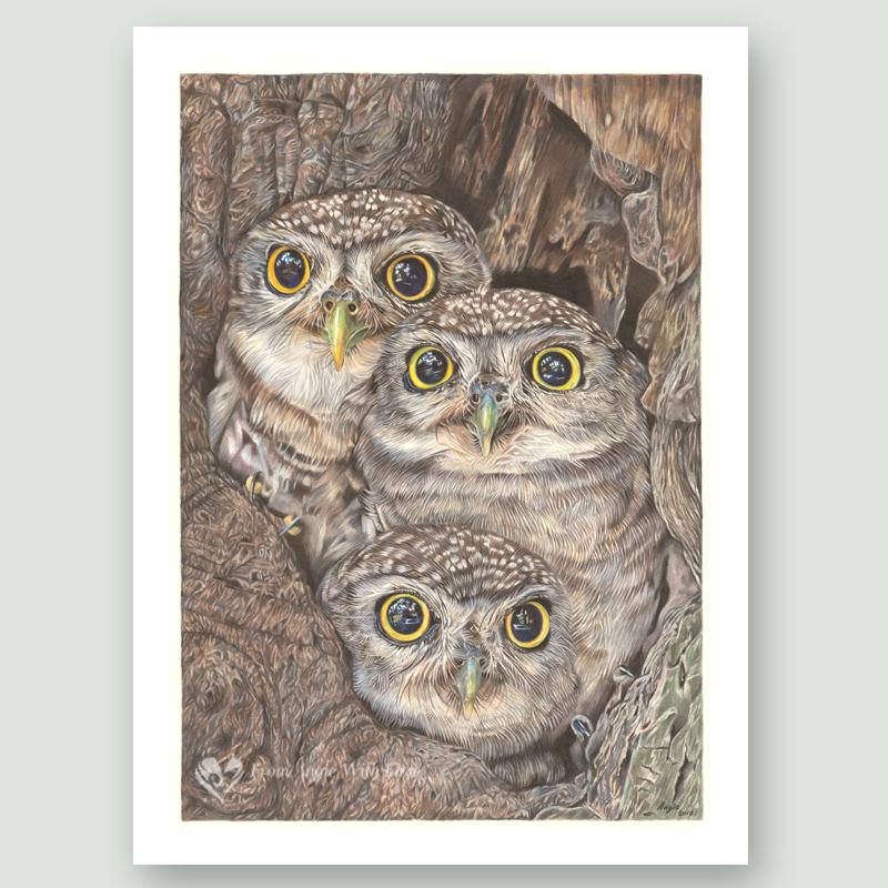 Fledging Day - Little Owl Portrait by Wildlife Artist Angie