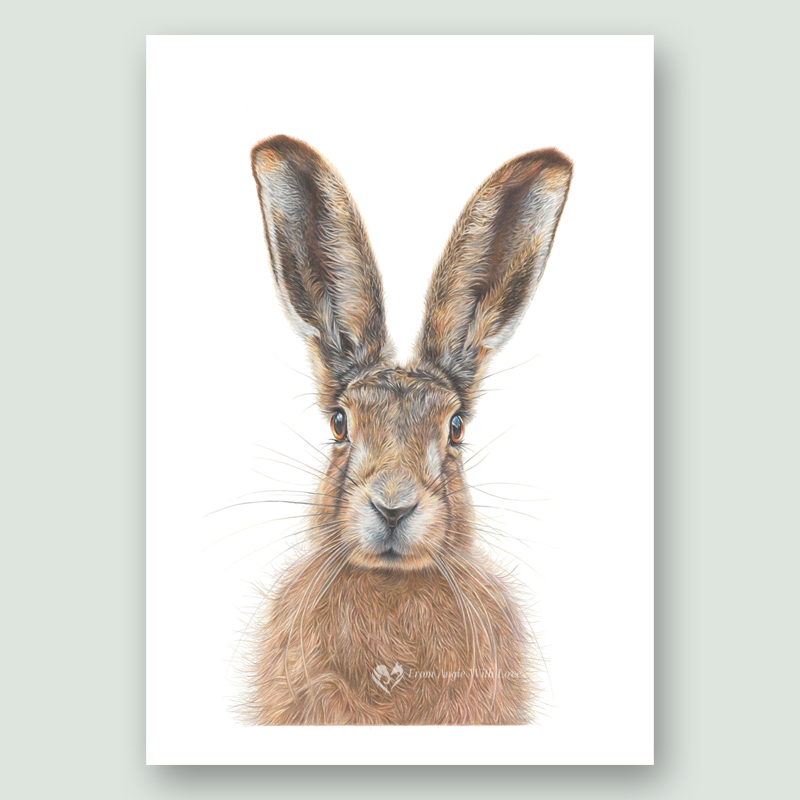 Mr Brambles Hare portrait, by wildlife artist From Angie with Love x