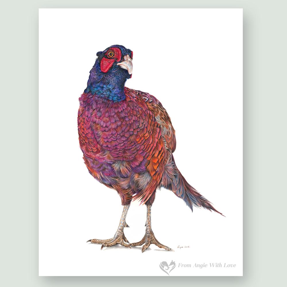 Inquisitive George Coloured Pencil Pheasant Portrait by Wildlife Artist Angie