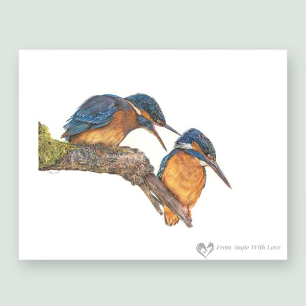 Domestic Bliss - Coloured pencil Kingfisher portrait by wildlife artist Angie