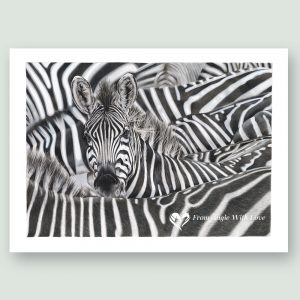 Lost in a Crowd - Coloured pencil Zebra portrait by wildlife artist Angie.