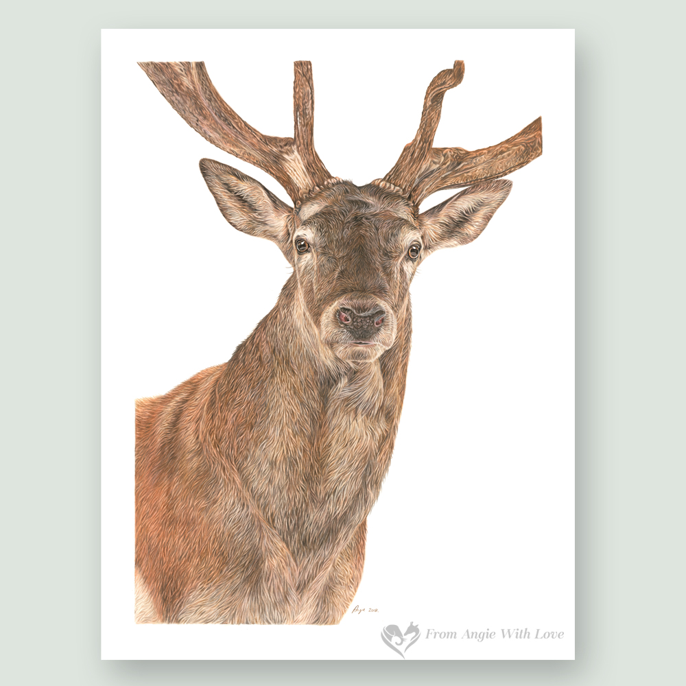 Monarch - Red Deer Stag Portrait by Wildlife Artist Angie