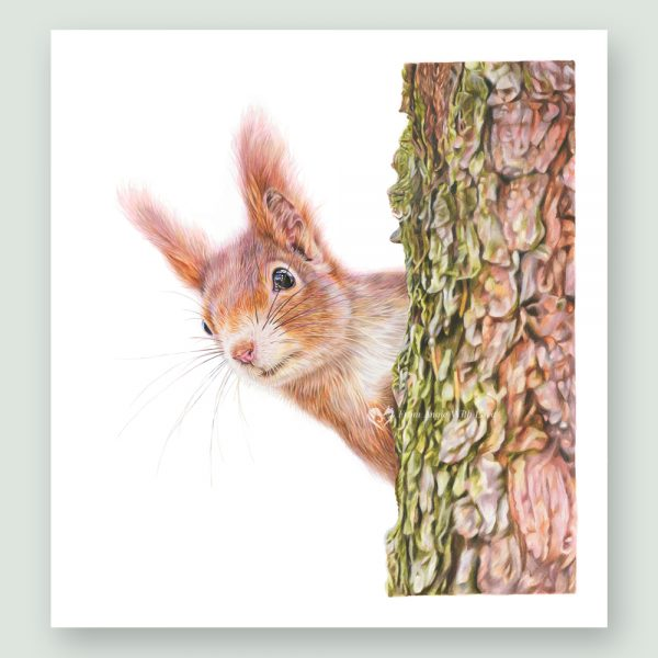Red Alert - Red Squirrel Portrait by Pencil Artist Angie x