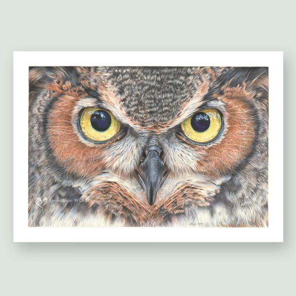 A Thousand Yard Stare - Coloured pencil Eagle Owl portrait