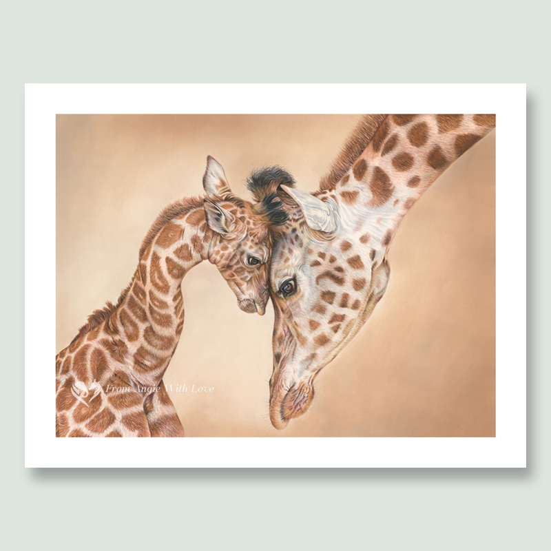 Buy limited edition prints and original wildlife art by pencil artist Angie, including beautiful Giraffe portrait 'Tenderness'.